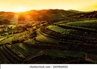 vineyards of Valpolicella aerial viewat sunset