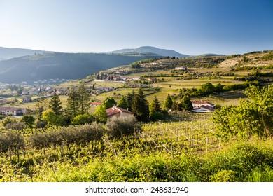 Vineyards in the Valpolicella region