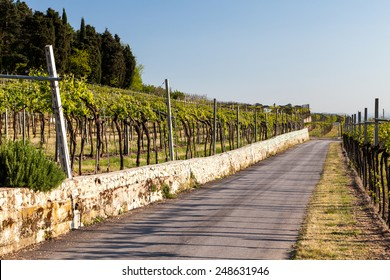 Vineyards in the Valpolicella region