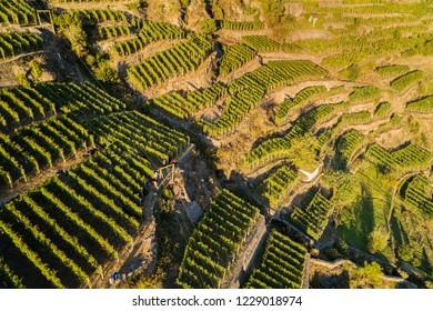 Vineyards of Valtellina (IT) - Aerial view