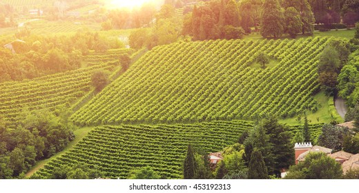vineyards of the Veneto valleys