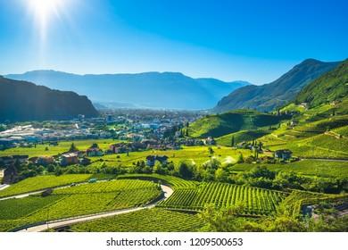 Vineyards view in Santa Maddalena Rencio Bolzano. Trentino Alto Adige Sud Tyrol, Italy, Europe.