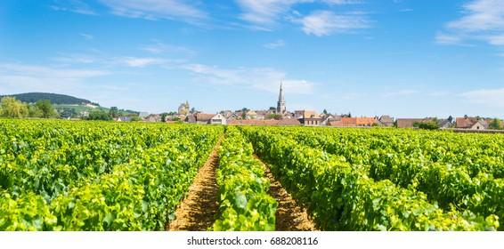 Weinberge mit dem Dorf Meursault, Frankreich