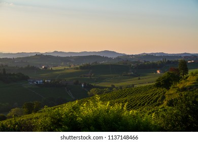 Vineyards in wine area in Monferrato region, piedmont, italy