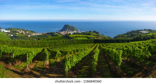 Vineyards and wine production with the Cantabrian sea in the background, Getaria Spain