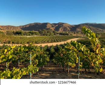 Vineyards at the wine region in Temecula, Southern California.