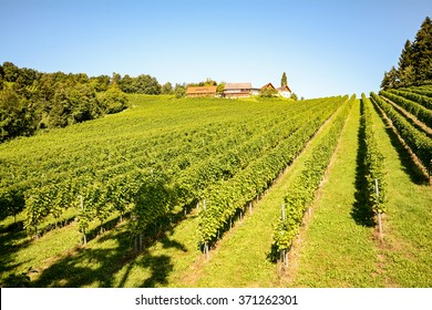 Vineyards and winery along the South Styrian Wine Road in autumn, Austria Europe