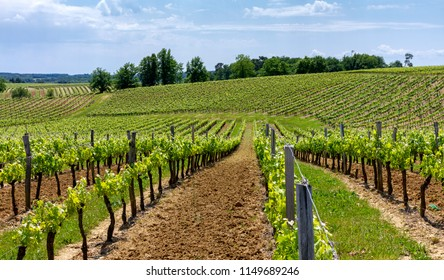 Vineyards and wines of France