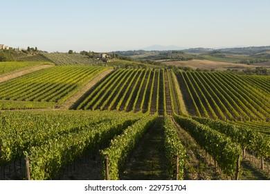 Vineyeard in Chianti, Toscany, Italy, famous landscape