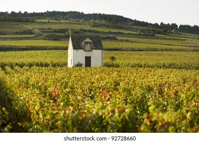 Vineyeards of Beaune