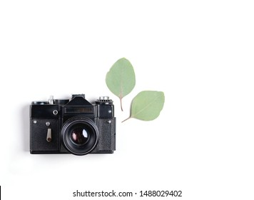 Vintage analog camera with eucalyptus leaves as decoration isolated on white background. Flat lay. Top view. Copy Space