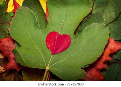Vintage autumn fallen leaves on the old wooden table with red heart