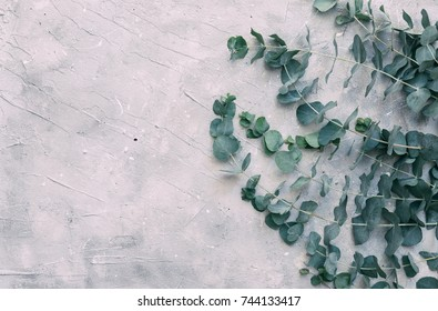 Vintage background with Eucalyptus leaves over grey background. Flat lay. Copy space
