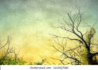 Vintage bare tree in sepia and blue tones. Nature background.