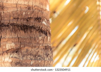 Vintage beach travel lifestyle palm tree background