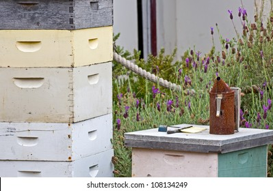 Vintage beekeeping hives, smoker and equipment in a garden
