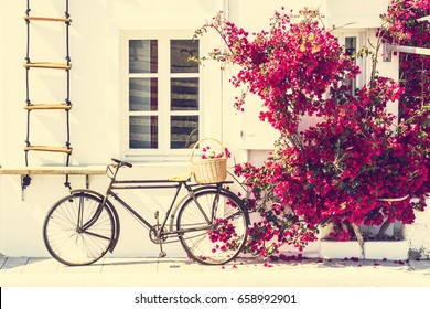Vintage bicycle with a basket against the white wall of the house next to a red flowering bush, Santorini, Greece