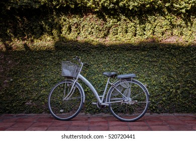 Vintage bicycle with green leaf background