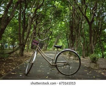 Vintage bicycle in park with big trees