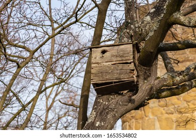 vintage bird house in an old tree