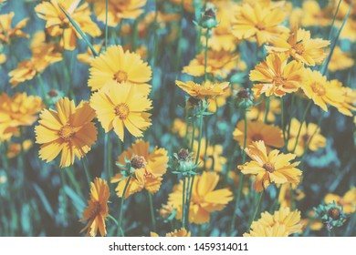 Vintage blossoming flowers in the garden in summer. Flowers nature background.