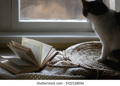 Vintage book, woven basket, tabby cat and crochet blanket. Cozy details at home. Selective focus.