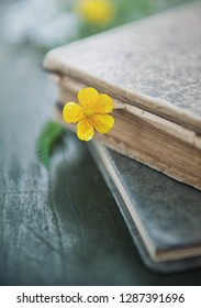 Vintage books and meadow yellow flower on the old wooden background