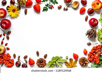 Vintage border from fallen leaves, chestnuts, cones, rowan, flowers and fruits on the white. Thanksgiving autumnal background.