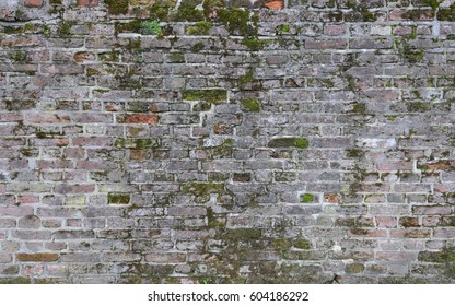 Vintage brick wall background partly covered with moss