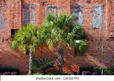 Vintage brick wall in downtown Columbia, South Carolina has been landscaped and rejuvenated.  Three Palmetto palm trees stand against rustic brick wall.
