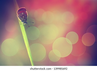 Vintage butterfly on flower.