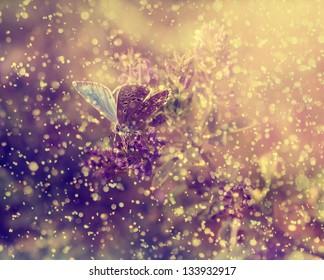 Vintage butterfly on purple flower