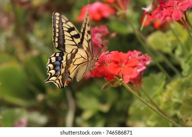 Vintage butterfly in spring from morocco