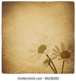 Vintage chamomile flowers background. Isolated on white.