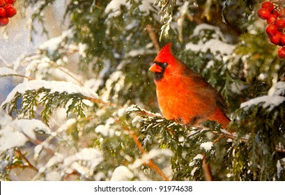 Vintage Christmas card with a beautiful male northern cardinal and red berries in the snow with copy space.