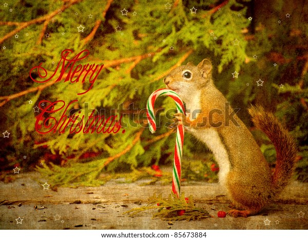 Vintage Christmas card with a cute squirrel holding a candy cane.