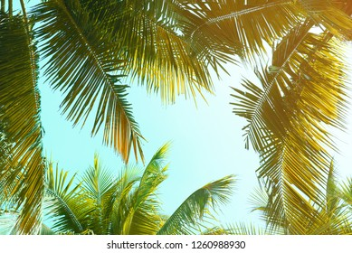 Vintage coconut leaves and sky background,summer theme.