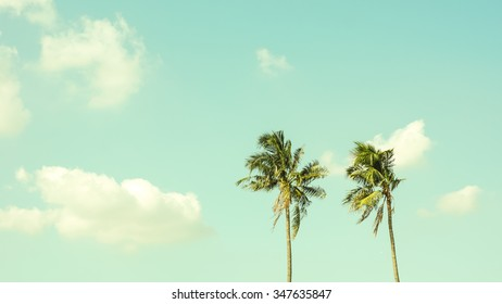 Vintage Coconut palm tree with sky - Horizontal