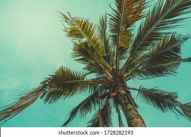 Vintage coconut tree background sky