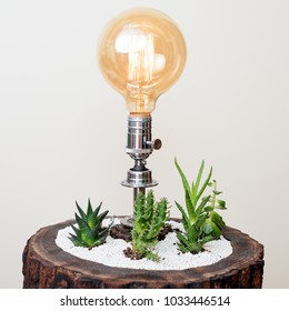 Vintage and creative interior lighting table lamp for modern home decor with succulents.