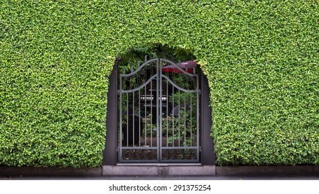 Vintage curved steel doors and green leaves wall