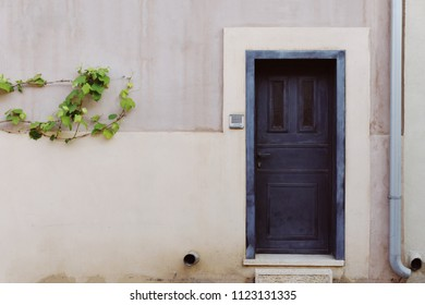 Vintage door with intercome. Grapevine on the wall with copy space.