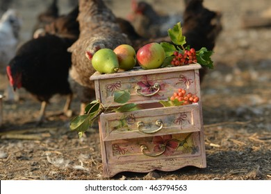 Vintage dresser . Farm yard. Chickens in the yard is considered the author's dresser . Ripe apples lie on the vintage dresser .