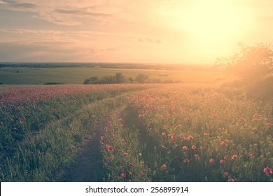 Vintage effected photo of poppy field in sunset