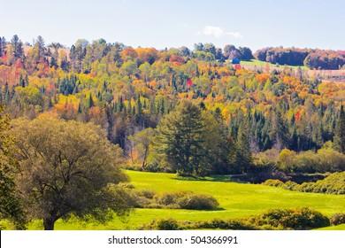 Vintage Fall foliage