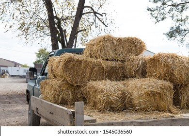 Vintage Farm Truck hauling bales of hay on a farm