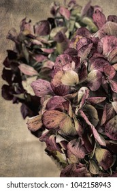 Vintage filter effect on faded hydrangea leaves.