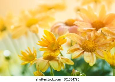Vintage flower background at sunset light