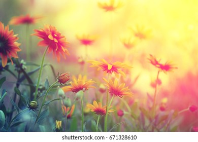 Vintage flower background at sunset light