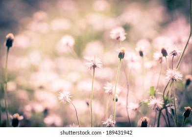 Vintage flower in garden